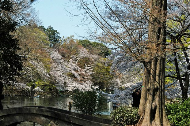 20200326_善福寺公園・井の頭公園_10.JPG