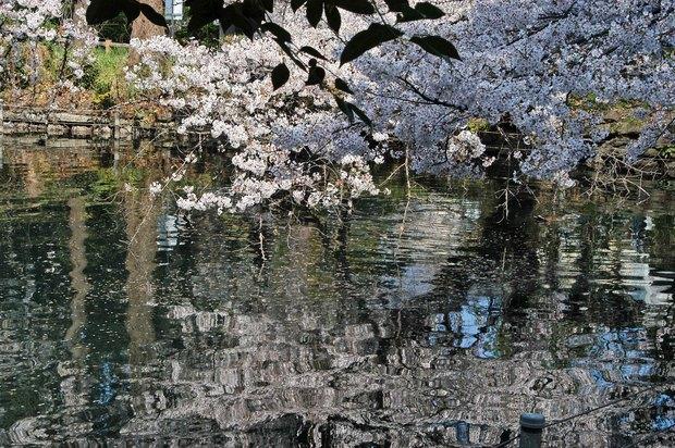 20200326_善福寺公園・井の頭公園_11.JPG