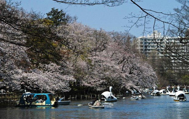 20200326_善福寺公園・井の頭公園_12.JPG
