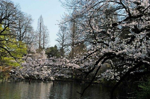 20200326_善福寺公園・井の頭公園_13.JPG