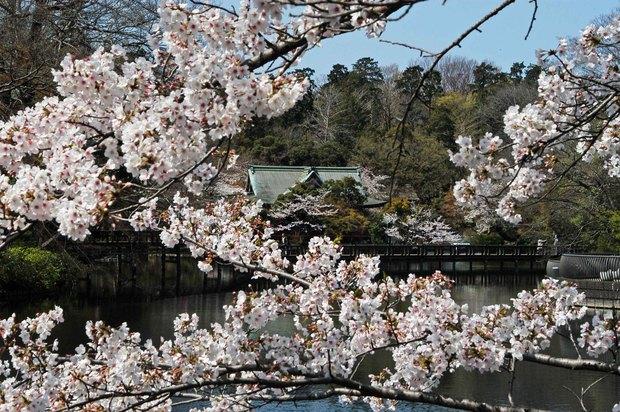 20200326_善福寺公園・井の頭公園_14.JPG