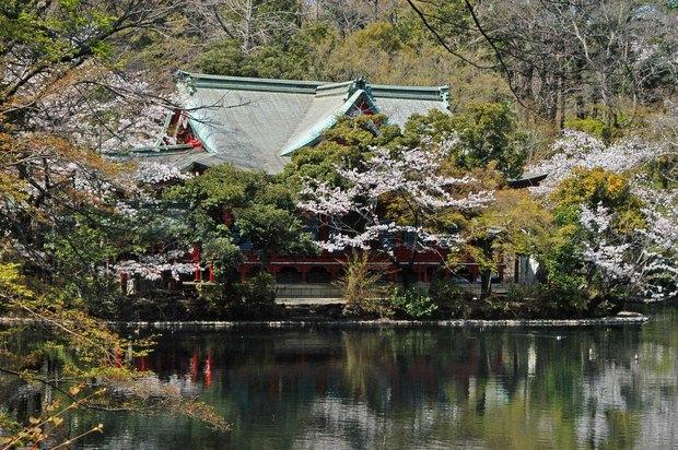 20200326_善福寺公園・井の頭公園_15.JPG