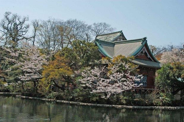 20200326_善福寺公園・井の頭公園_16.JPG