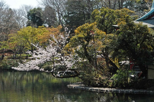 20200326_善福寺公園・井の頭公園_17.JPG
