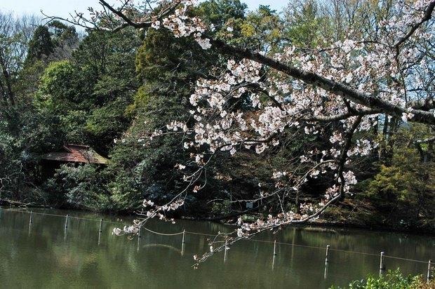 20200326_善福寺公園・井の頭公園_2.JPG