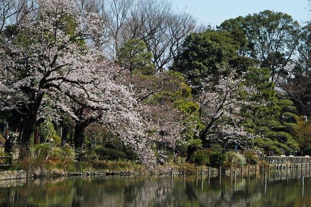 20200326_善福寺公園・井の頭公園_3.JPG
