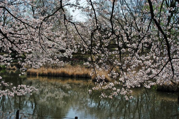 20200326_善福寺公園・井の頭公園_6.JPG