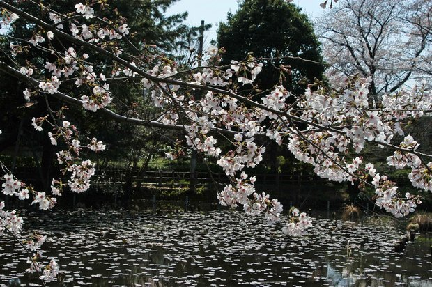 20200326_善福寺公園・井の頭公園_7.JPG