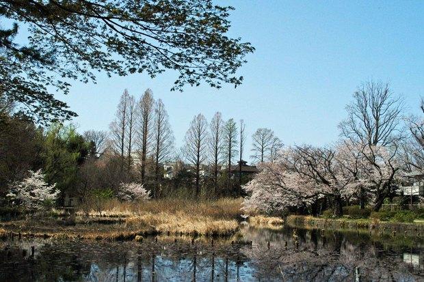 20200326_善福寺公園・井の頭公園_8.JPG
